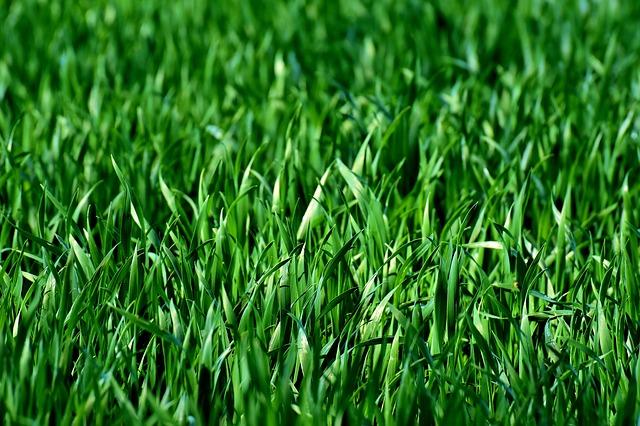meadow-3375052_640