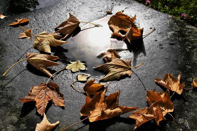 autumn-3648737_640