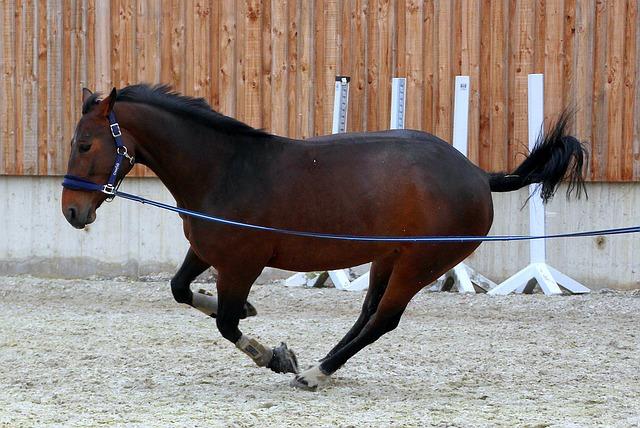 horse-1307916_640