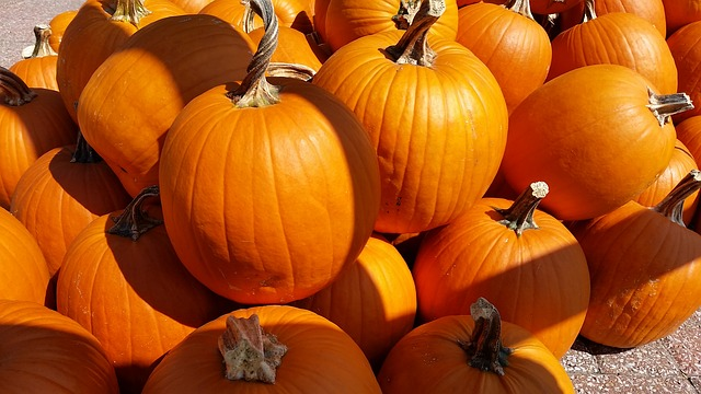 pumpkins-2784183_640