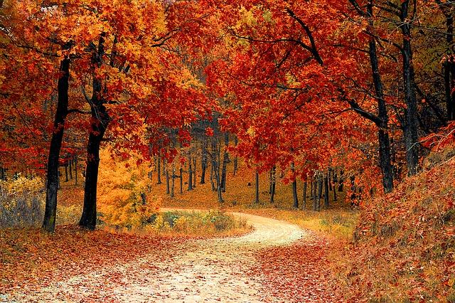 fall-1072821_640