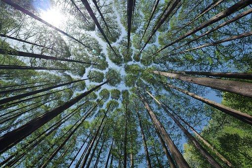 tree-4450514__340