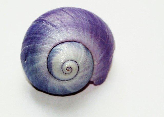 snail-271975_640